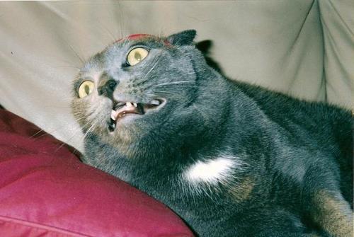 scared_cat_face-12308